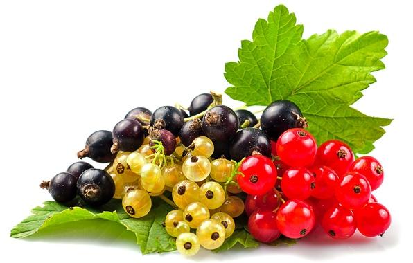Картинка ягоды, красная смородина, чёрная смородина, белая смородина