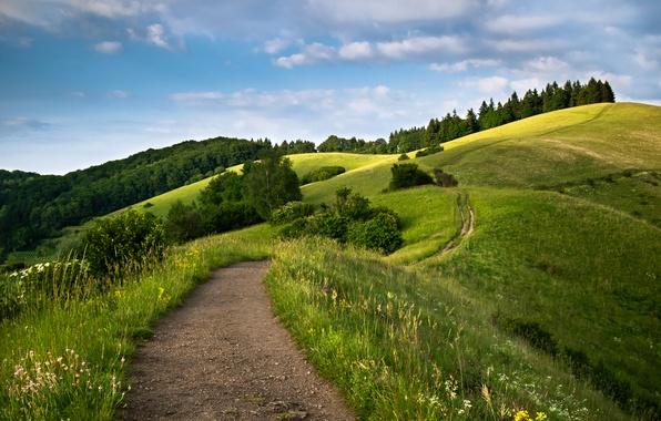 Картинка дорога, небо, трава, облака, деревья, холмы, луг