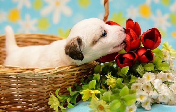 Картинка цветы, корзина, малыш, щенок