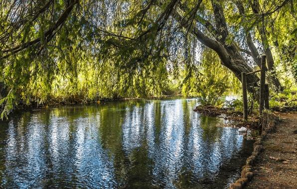 Картинка деревья, река, листва
