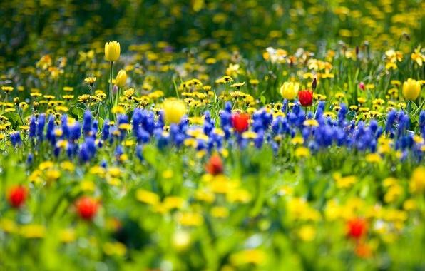 Картинка цветы, природа, сад, поле flowers