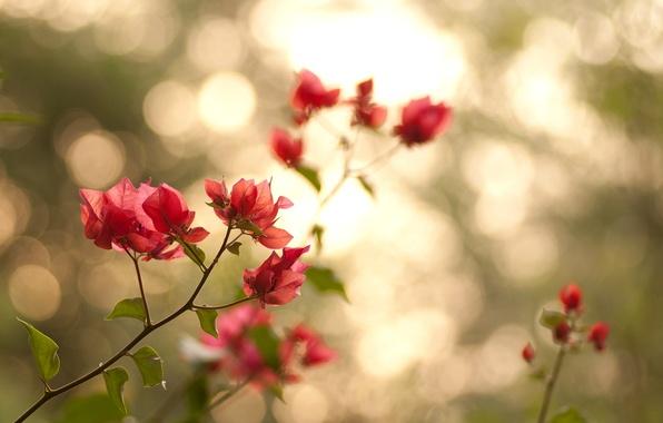 Картинка листья, свет, цветы, ветки, природа, лепестки, зеленые, розовые, боке