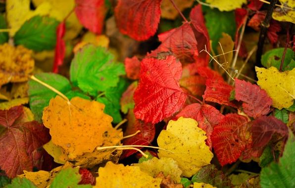 Картинка осень, листья, цвет, багрянец