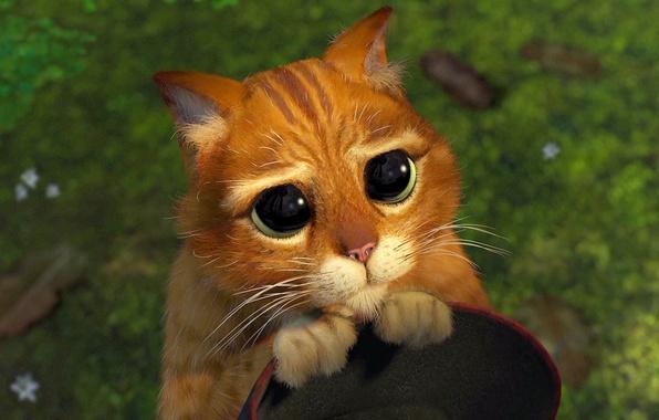картинки из мультика кот