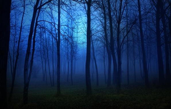 Картинка лес, свет, деревья, пейзаж, ночь, lights, темнота, страх, луна, moon, forest, trees, night