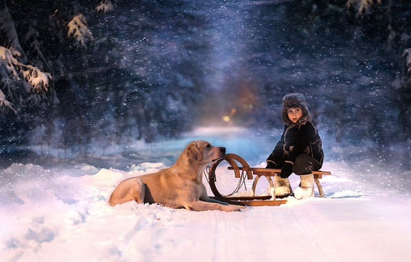 Картинка зима, лес, взгляд, снег, ночь, ребенок, собака, санки