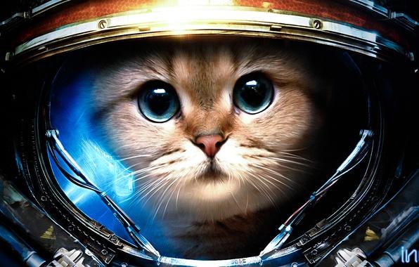 Обои картинки фото starcraft, кот, скафандр