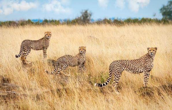 Обои саванна африка животные  раздел Животные размер
