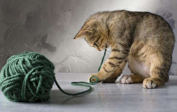 Картинка кошка, кот, клубок, котенок, зеленые, нитки, играет, полосатая