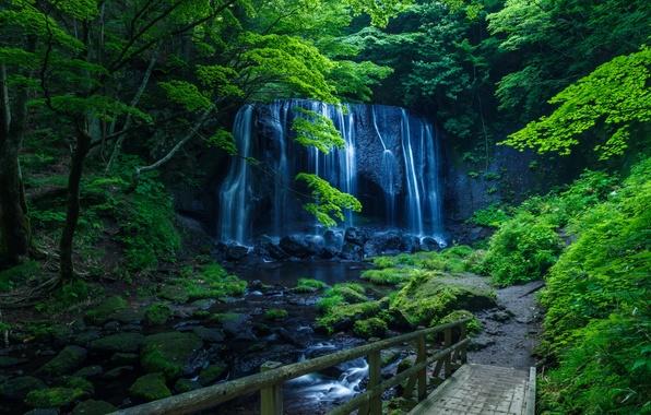 Картинка зелень, лес, деревья, скала, ручей, камни, водопад, мох, мостки