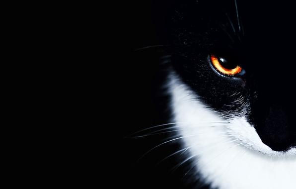 Картинка кошка, кот, глаз, фон, чёрный, минимализм