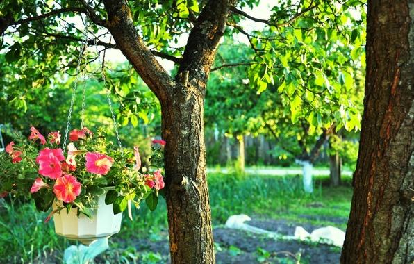 Картинка Зелень, Цветы, Дерево, Деревья, Листья, Ветки, Ствол, Ветви, Листва, Viper, Горшок с Цветами, Цепочка, Яркие …