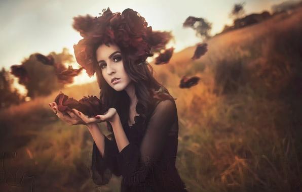 Картинка цветы, ветер, портрет, лепестки, Rose