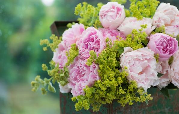 Обои на рабочий стол цветы пионы