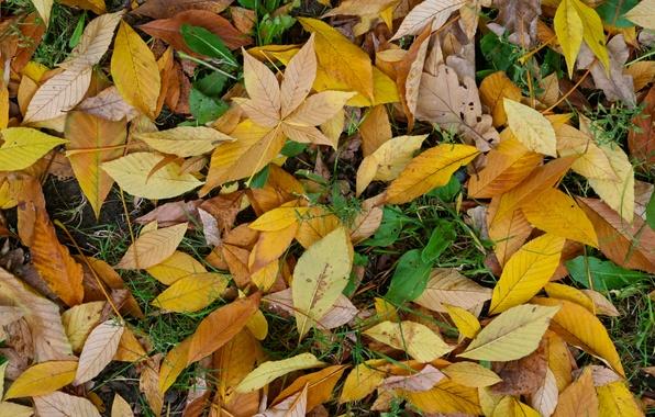 Картинка green, yellow, autumn, leaf