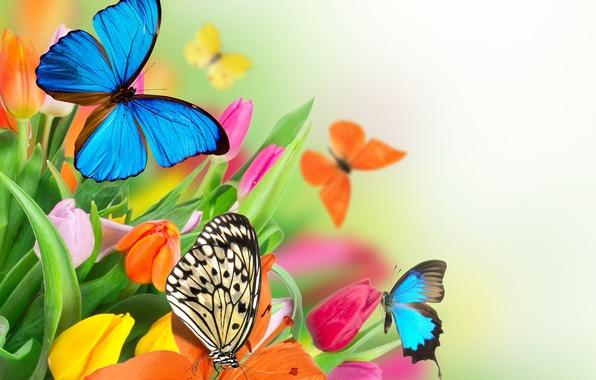 Картинка бабочки, цветы, весна, colorful, тюльпаны, fresh, flowers, beautiful, tulips, spring, butterflies