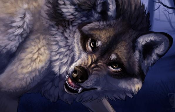 Картинка животные, взгляд, волк, хищник, арт, пасть, клыки