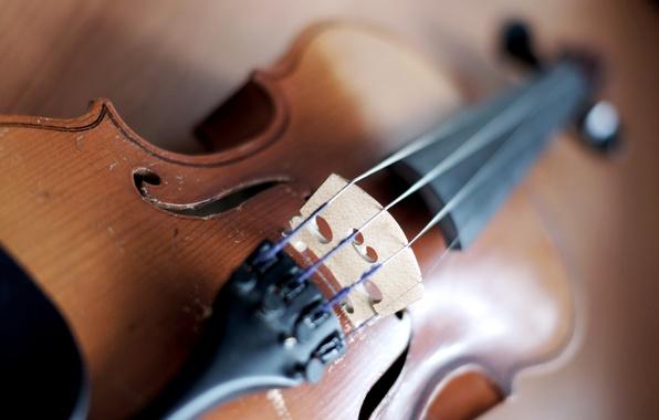 Картинка макро, фото, обои, скрипка, струны, корпус, инструмент, картинка, wallpapers, музыкальный
