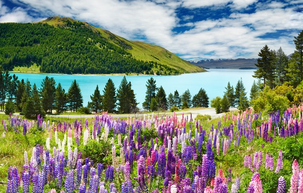 Картинка лес, небо, облака, деревья, пейзаж, горы, озеро, синее, mountains, лаванда, Lavander
