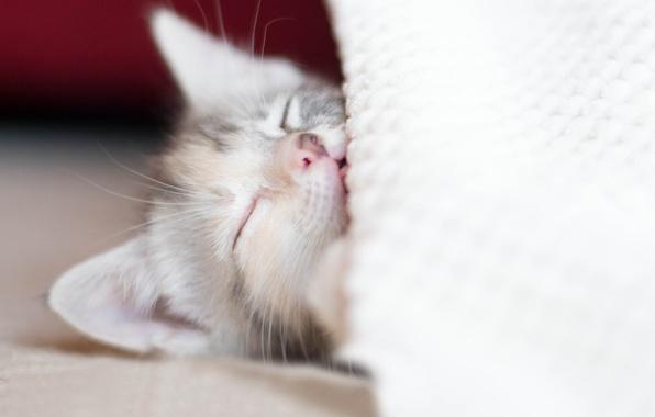 Картинка котенок, отдых, сон, малыш