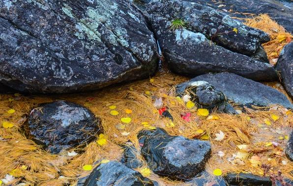 Картинка осень, листья, вода, ручей, камни