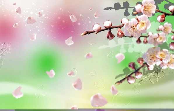 Картинка цветы, коллаж, ветка, весна, сад