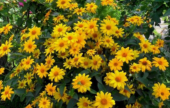 Цветы летом обои картинки