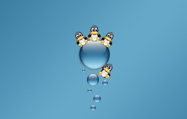Картинка синий, Минимализм, пингвины