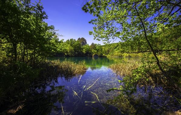 Картинка зелень, трава, деревья, озеро, кусты, Хорватия, Plitvice Lakes National Park
