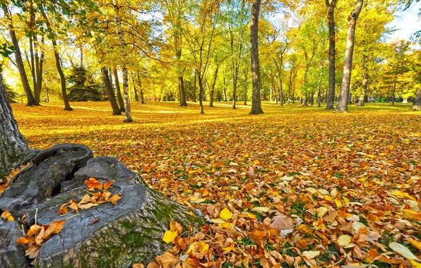 Картинка осень, лес, трава, листья, деревья, парк