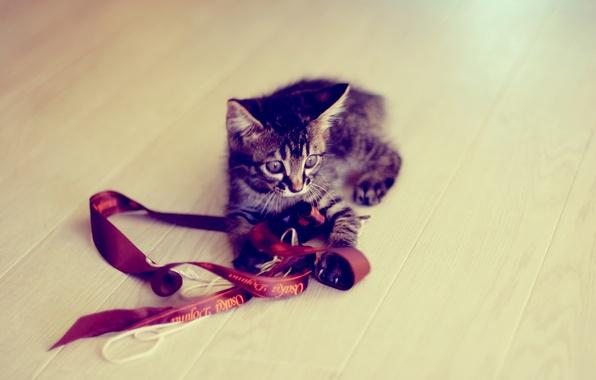 Картинка котенок, серый, игра, лента, полосатый