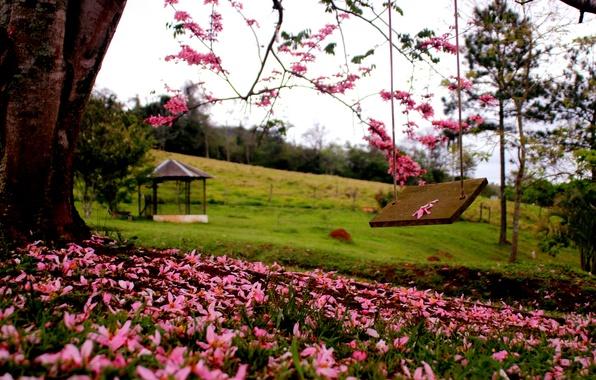 Картинка лес, трава, деревья, цветы, природа, парк, весна, grass, forest, trees, nature, park, flowers, spring, walk