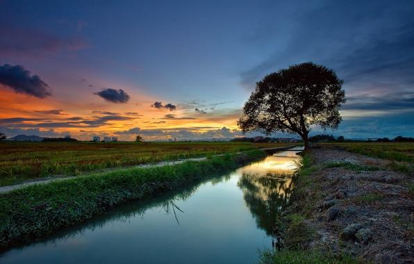Картинка пейзаж, закат, река, дерево