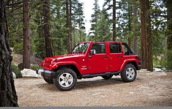 Обои картинки фото jeep, wrangler, sahara, красный, джип, лес