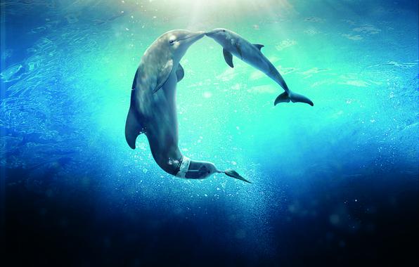 Картинка Dolphin, Sun, Water, Line, Wallpaper, Family, Ocean, Year, Sea, Morgan Freeman, Movie, Film, 2014, Animals, …