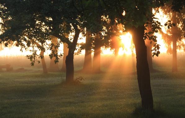 Картинка зелень, лес, лето, трава, солнце, лучи, свет, деревья, природа, рассвет, утро, сад