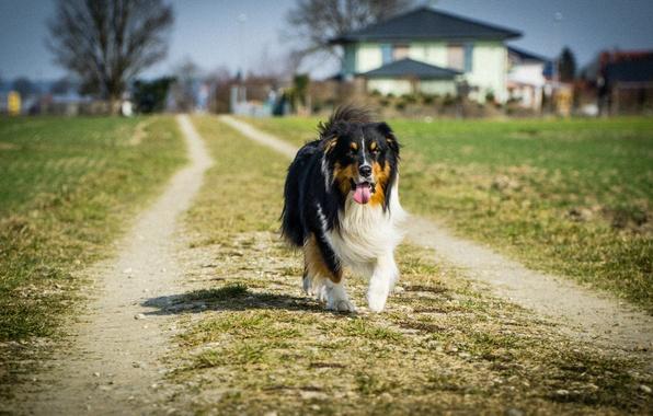 Картинка трава, дом, путь, тень, собака