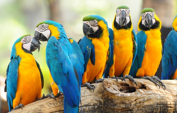 Картинка багажник, birds, птиц, trunk, parrots, попугаев