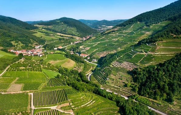 Картинка горы, поля, дома, Австрия, панорама, леса, плантации, Wachau