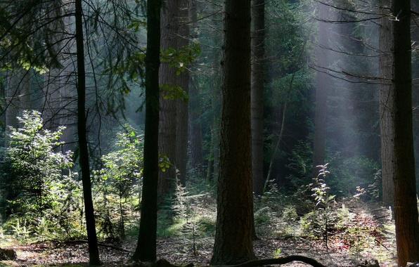 Картинка лес, свет, деревья, ветки, природа