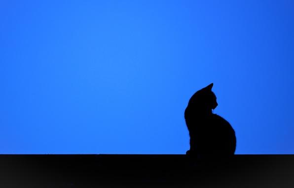 Картинка кошка, фон, минимализм, силуэт