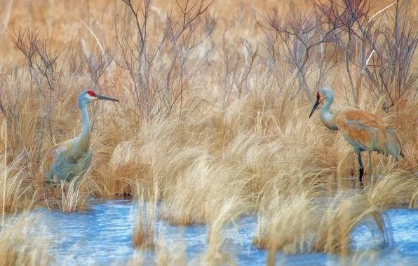 Картинка птицы, природа, стиль, фон