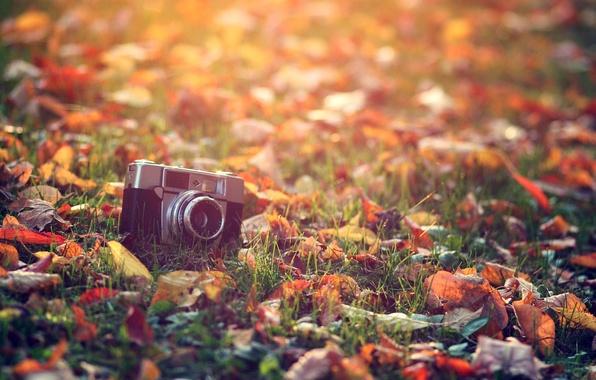 Картинка осень, трава, листья, солнце, макро, свет, тепло, обработка, фотоаппарат