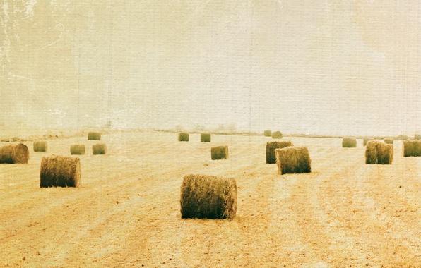 Картинка поле, стиль, фон, сено