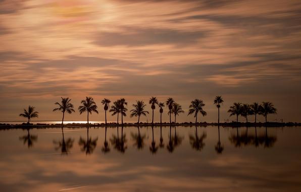 Картинка закат, отражение, пальмы, океан, Майами, Флорида, Miami, Florida, Атлантический океан, Atlantic Ocean