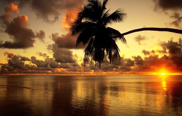 Картинка Закат, Пляж, Пальма