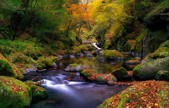Картинка осень, лес, листья, река, ручей, камни, мох, Природа