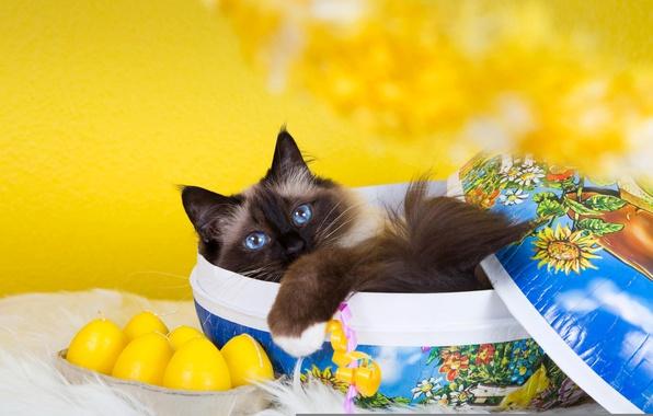 Картинка кошка, кот, желтый, котенок, фон, коробка, пушистый, лежит