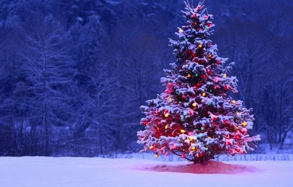 Картинка лес, снег, ночь, огни, елка, ель, Новый Год, Рождество, украшение, гирлянда, Christmas, New Year, Xmas, …