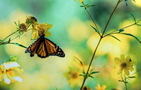Картинка макро, цветы, фото, бабочка, растения